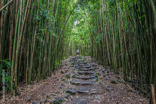 Tuinposter Bamboe Pipiwai Trail Stone Path in Haleakala National Park