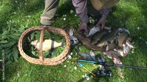 Fényképezés Fisherman placing freshly caught fish in wicker basket between nettles to keep t