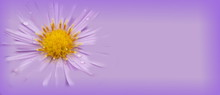 Light Purple Flower Banner