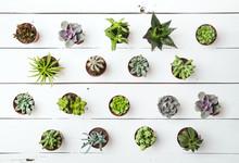 Floral Pattern. Succulents. Ba...