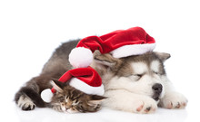 Alaskan Malamute Dog And Maine Coon Cat With Red Santa Hats Slee