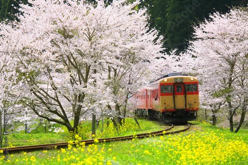 Spoed Foto op Canvas Kersen 日本 絶景 春 桜 菜の花 ローカル線