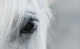 Oko białego mustanga - 106422775