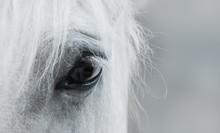 Eye Of White Mustang