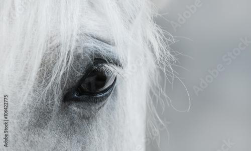 Fotografie, Obraz  Eye of white mustang