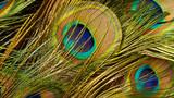 Fototapeta Sypialnia - Peacock feathers