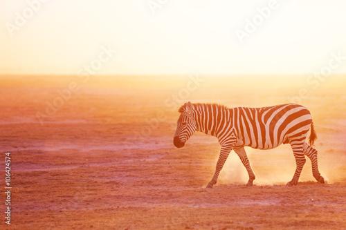 Poster Zebra Plains zebra pasturing at Amboseli National Park