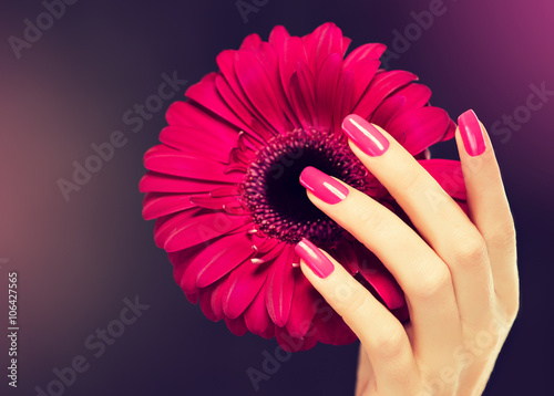Elegant female hands with pink manicure on the nails Poster