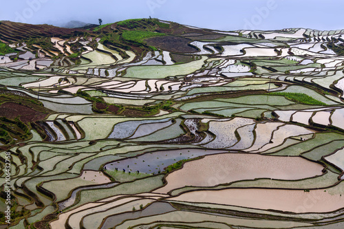 Foto auf Gartenposter Reisfelder Terraced rice fields in Yuanyang county, Yunnan, China.