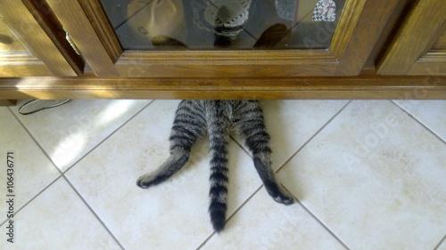 Fotografie, Obraz  Crazy cat