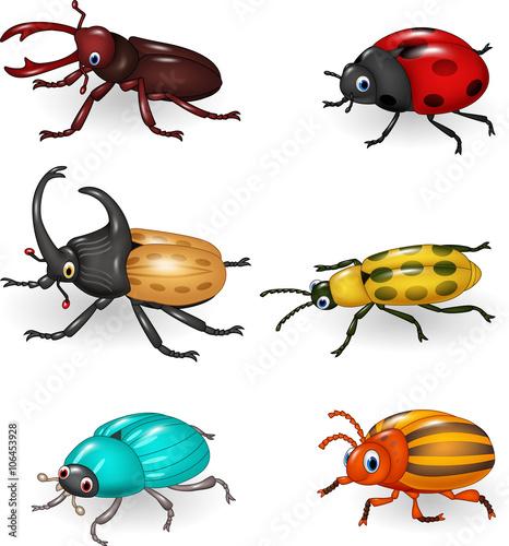 Obraz na płótnie Cartoon funny beetle collection