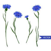 Cornflower Vector Set