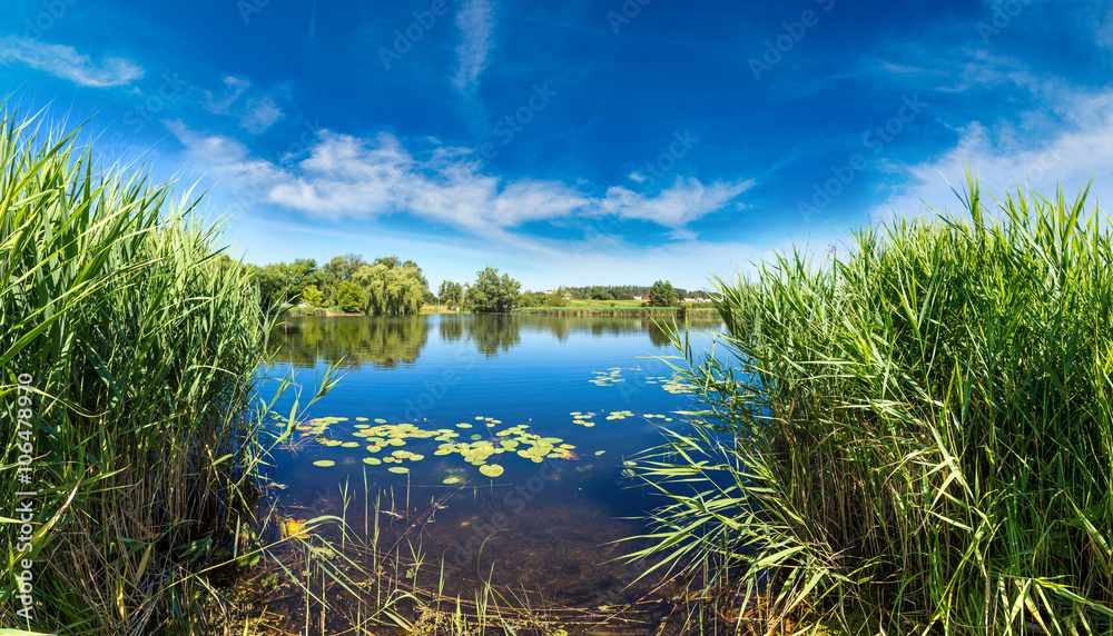 Fototapety, obrazy: Calm pond and water plants