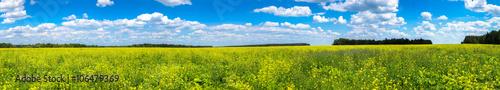 Poster Platteland Colza field