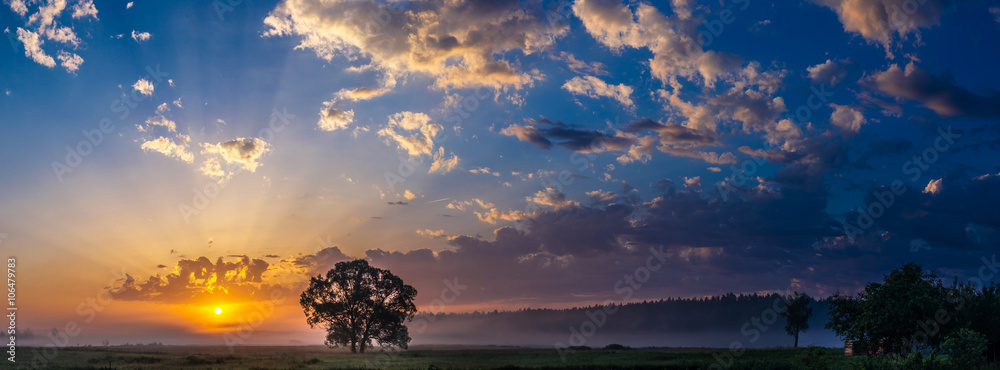 Fototapety, obrazy: Beautiful sunrise and tree