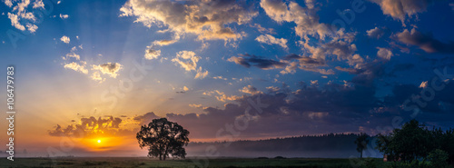 Poster Bomen Beautiful sunrise and tree