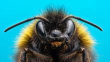 Angry Bumblebee