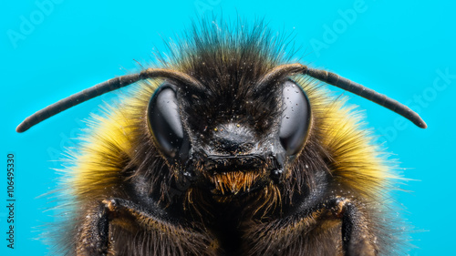 Fotografering Angry Bumblebee