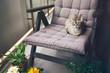 Devon Rex cat sitting on the balcony. Snoozing