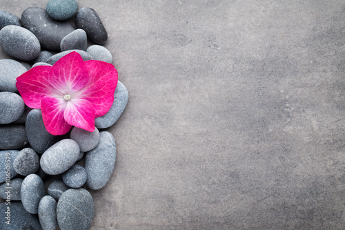Photo sur Plexiglas Zen pierres a sable Spa stones and flowers, on grey background.