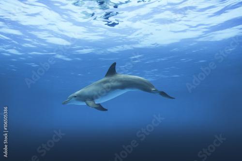 Spoed Foto op Canvas Dolfijn Delfin