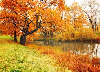 Obraz Autumn landscape with oak trees near the river