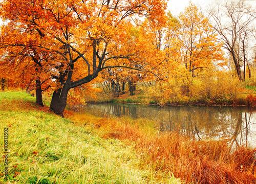 Poster Oranje eclat Autumn landscape with oak trees near the river
