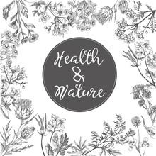Watercolor Vector Background Of Medicinal Herbs