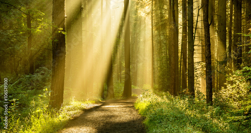 Golden rays of light shining through tree canopies on an Autumn morning with path in a forest. - 106519300