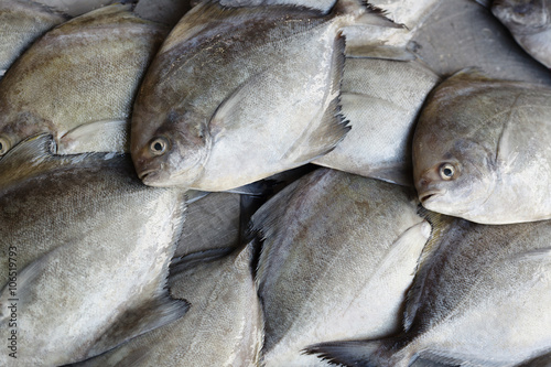 Fresh fish. Seafood in market. Background. Canvas Print