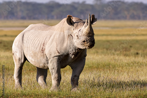 Tuinposter Neushoorn Beautiful black rhino