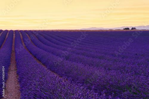 Spoed Foto op Canvas Violet Beautiful colors purple lavender fields near Valensole, Provence