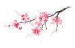 Leinwandbild Motiv Sakura branch. Original watercolor painting.