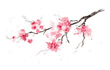 Sakura Branch. Original Watercolor Painting.