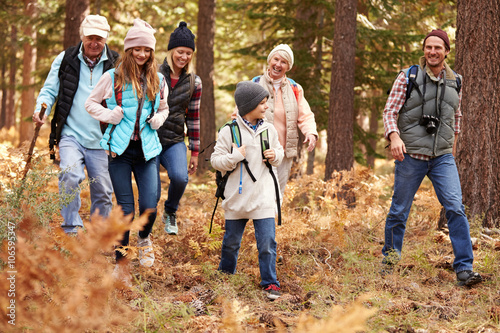Fotografie, Obraz  Multi generation family hiking in a forest, California, USA