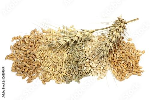Getreidekörner (Dinkel, Hafer, Roggen, Gerste, Weizen) isoliert auf weißem Hintergrund
