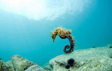 Here It Is Where You Hide The Seahorse