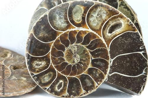 Photo sur Toile Les Textures nautilus ammonite fossil shell macro texture