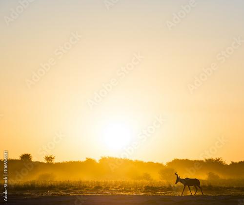 Spoed Foto op Canvas Kameel Africa Sunset Impala