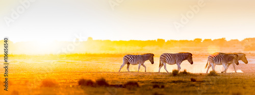 Photo sur Aluminium Zebra Africa Sunset Landscape