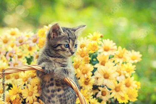 kot-w-ogrodzie-z-kwiatami