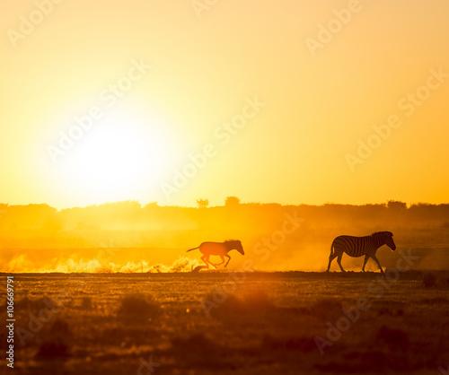 Spoed Foto op Canvas Kameel Zebra Family Sunset
