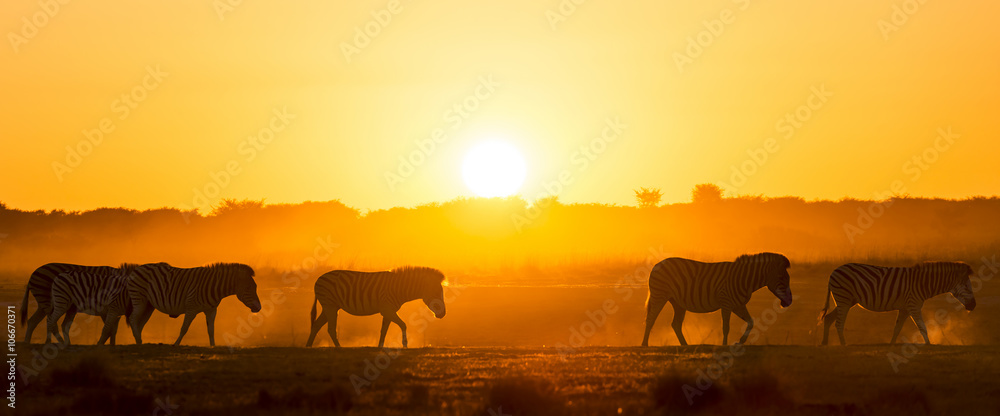 Zebra Sunset Africa