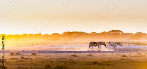 In de dag Zebra Zebra Sunset Botswana