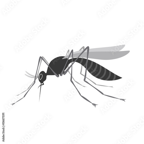 Mosquito with stinger isolated on white background. Zika virus. - 106671591