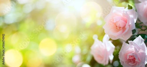 art Abstract spring or summer floral background