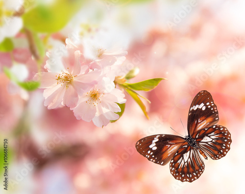 Foto op Canvas Azalea Spring blossoms with butterfly.