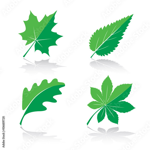 Set of Green Leafs. Vector Illustration. Plakát