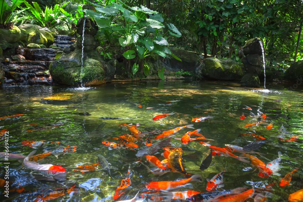 Fototapety, obrazy: Gold carp in the pond, KL Bird Park, Malaysia