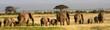 African elephants, Amboseli National Park, Kenya